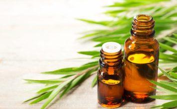 Aceite del árbol del té: usos y propiedades